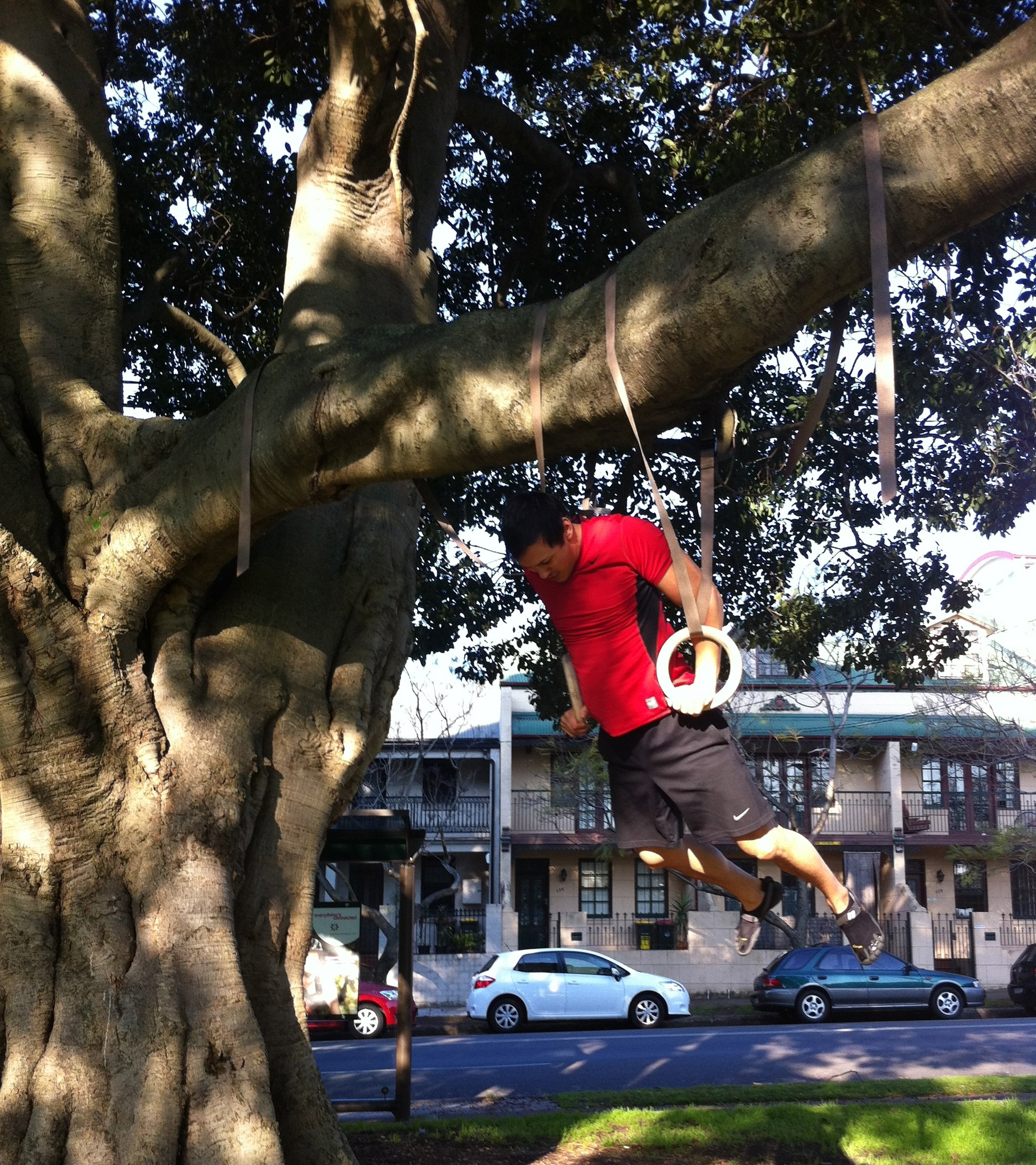 Muscle Ups in Tree